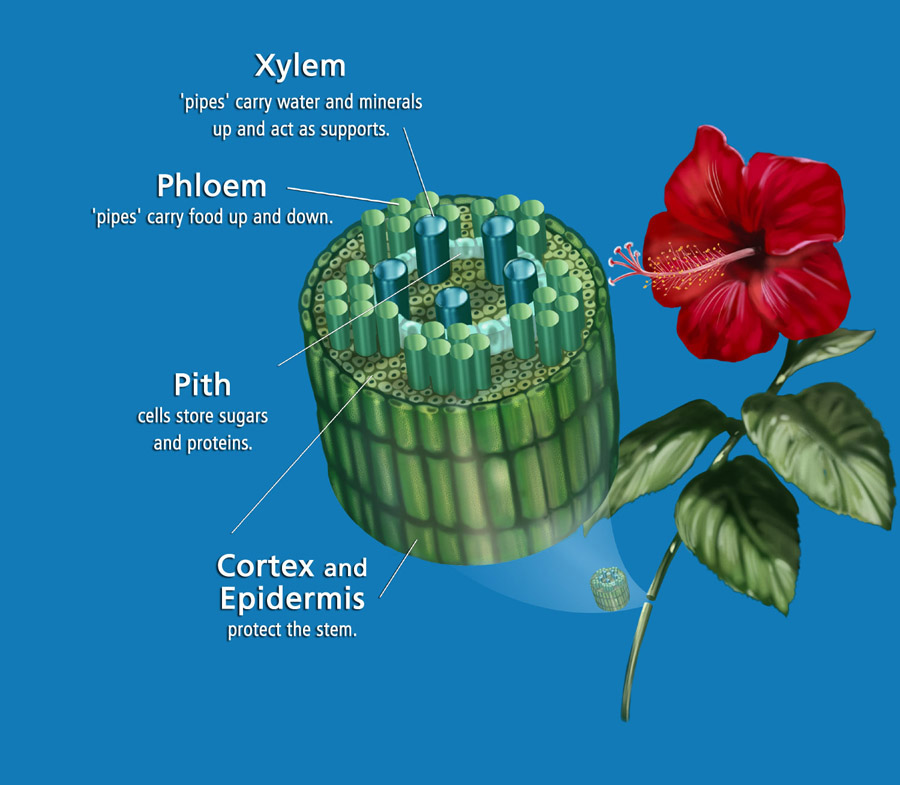 Plants - Science Exam Review (6th Grade)